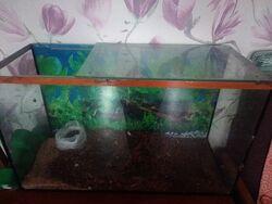 Отдам большой аквариум