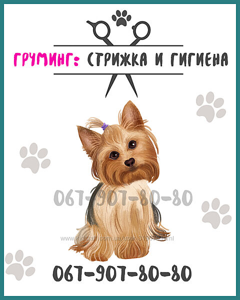 Груминг стрижка и гигиена собак