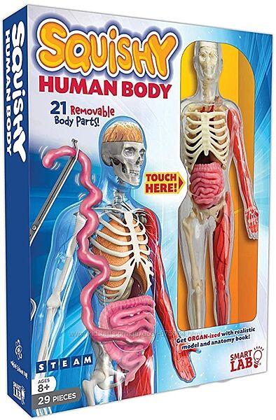 Анатомический конструктор Набор для изучения тела человека SmartLab