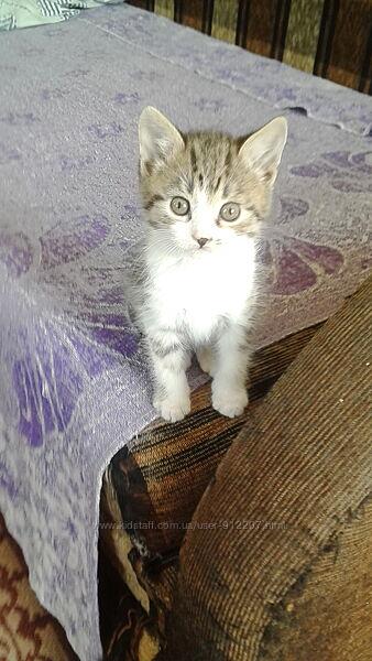 Котенок Маруся в хорошие руки для любви и заботы