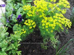 цветочки из сада