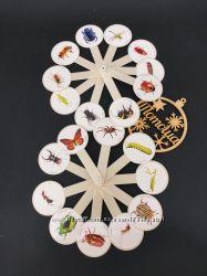 Учебный веер изучаем насекомых  Віяло вивчаємо комах Козлов 0133