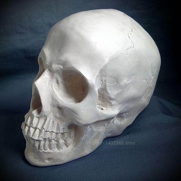 Череп гипсовый анатомический Учебная модель, предмет интерьера