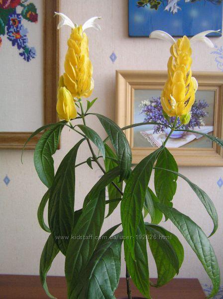 вазоны не цветущие фото и названия
