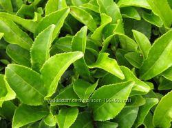 Минеральная пудра на основе зеленого чая