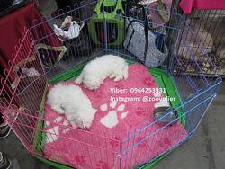 Вольер манеж клетка для собак 120х62х62h с дверкой Бесплатная доставка