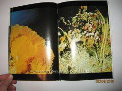 Книга-альбом Мир кораллов - окно в красочный подводный мир