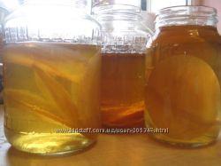чайный гриб, комбуча, медуза, средство для похудения, квас, пересылка