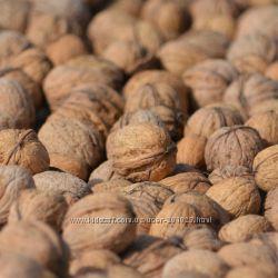 Грецкие орехи 2018. Свежий урожай.
