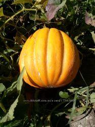 Семена дыни Эфиопка - одна из самых вкусных дынь.