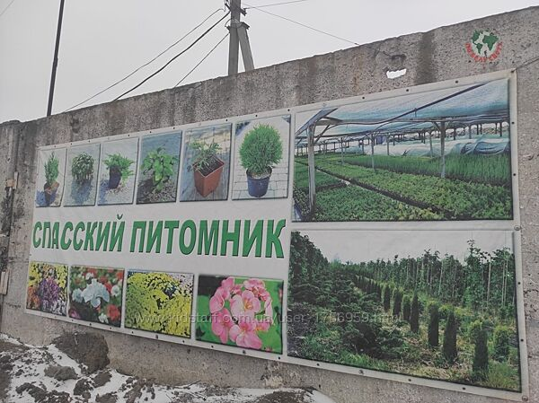 Пряный сад и ландшафтный парк Светланы Кульбашной  06.06.2021