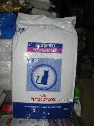 Роял Канин Янг Мэйл Royal Canin Young Male корм для кастрированных котов
