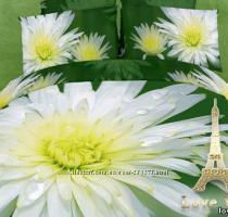 Комплекты постельного белья Сатин  ТМ Love You