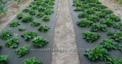 Агроволокно Плотность 50г на кв. м ширина 3, 2м черное мульчирующееГермания