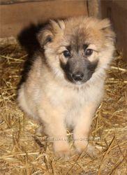 Множество собак и щенков ждут Вас в приюте Сириус