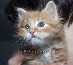 Котята и котики ищут дом Большой выбор