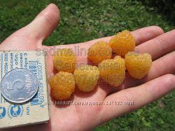 Саженцы малины - сорт Желтый-гигант.