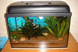Красивый готовый запущенный аквариум с полной начинкой.