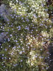 Растения с моей дачи с красивыми цветами