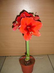 цветы комнатные , разные