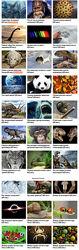 Александр Толмачёв 37 Видеолекций об окружающем мире