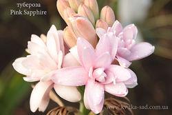 Тубероза-полиантес. Царственный парфюмированный цветок. Осень 2021